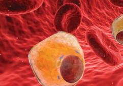 cholesterolmemeabsolutefinal