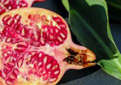 pomegranate-cover-image_santacruzcore