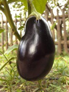 large-eggplant